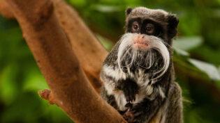 ITV orders London Zoo in lockdown show