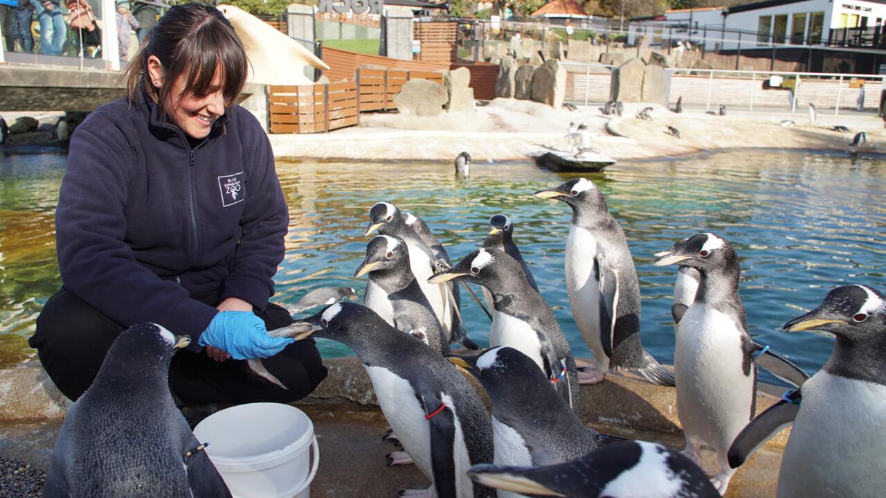 Tern takes a trip to the zoo for BBC Scotland