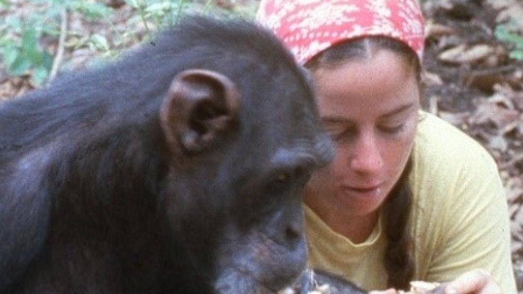 Keo tells story of Lucy the chimp for C4